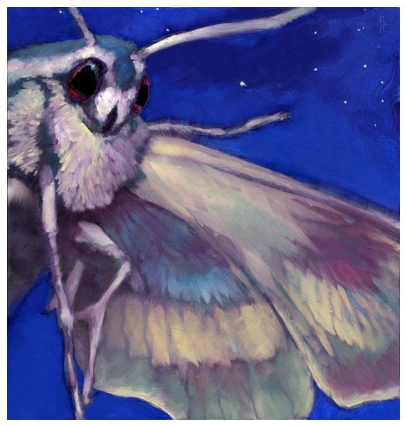 BH_web-NIght_Moth
